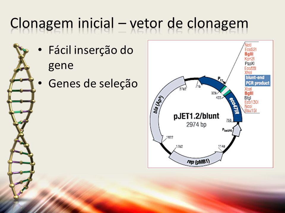 Fácil inserção do gene Genes de seleção
