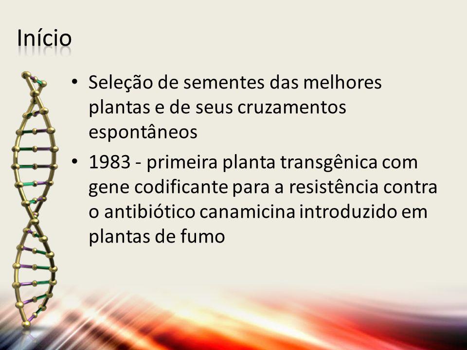 Seleção de sementes das melhores plantas e de seus cruzamentos espontâneos 1983 - primeira planta transgênica com gene codificante para a resistência