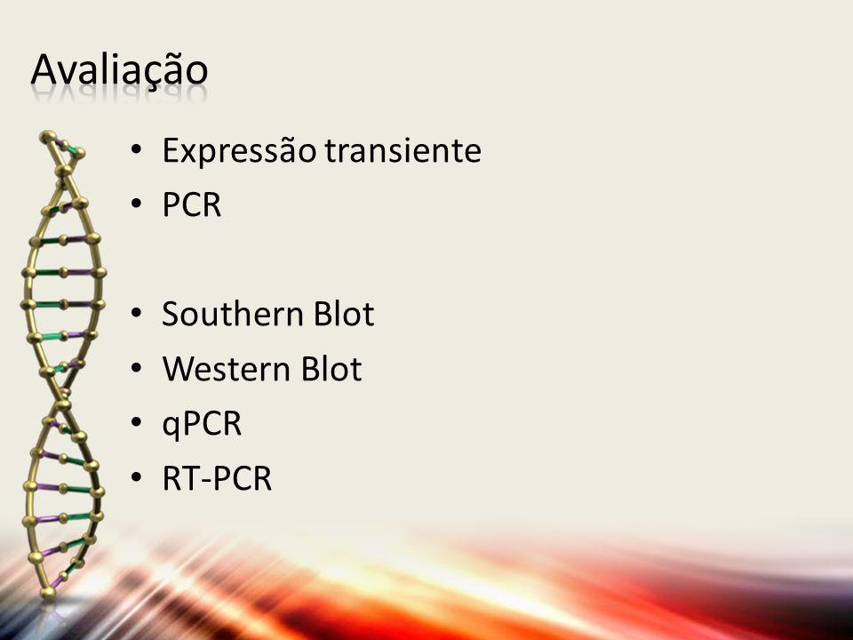 Expressão transiente PCR Southern Blot Western Blot qPCR RT-PCR