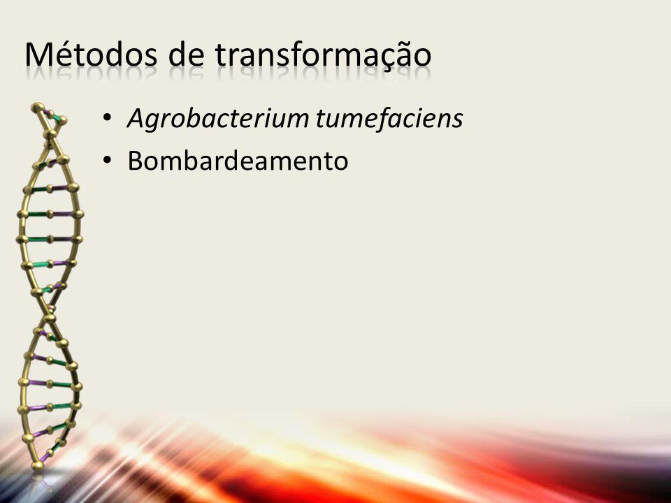 Agrobacterium tumefaciens Bombardeamento