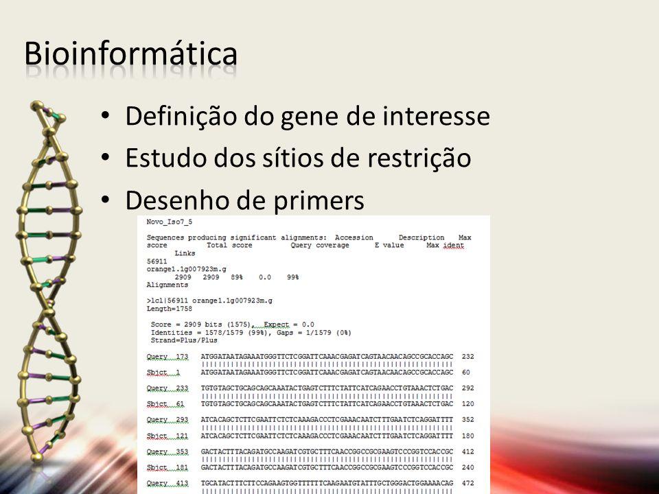 Definição do gene de interesse Estudo dos sítios de restrição Desenho de primers