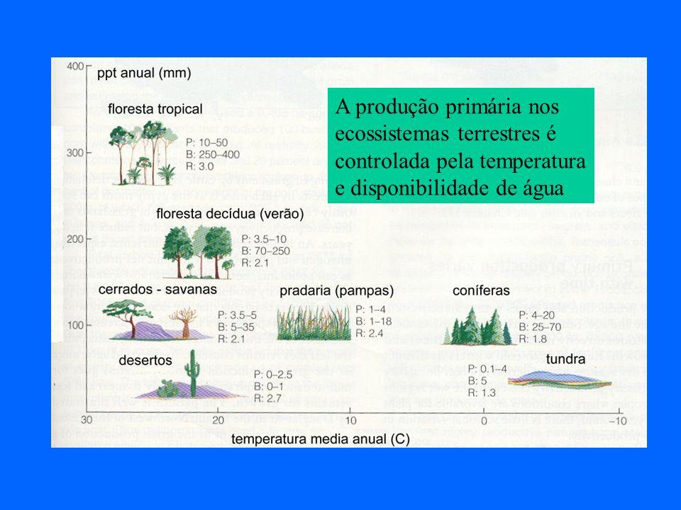 A produção primária nos ecossistemas terrestres é controlada pela temperatura e disponibilidade de água