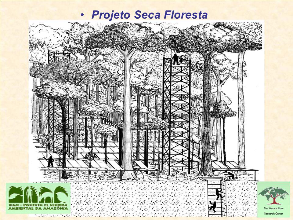 Projeto Seca Floresta