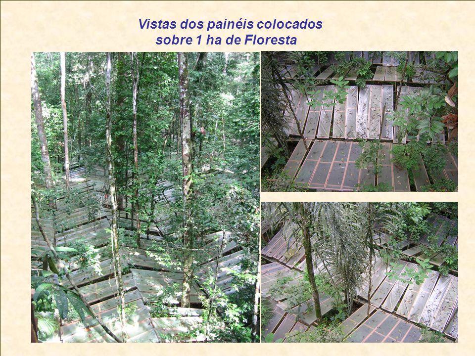 Vistas dos painéis colocados sobre 1 ha de Floresta