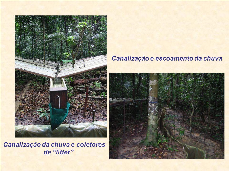 Canalização da chuva e coletores de litter Canalização e escoamento da chuva