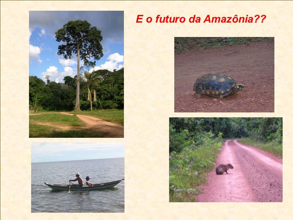E o futuro da Amazônia??
