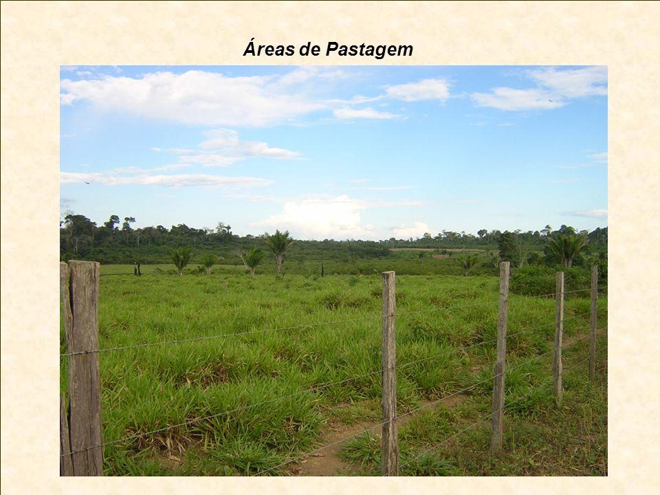 Áreas de Pastagem