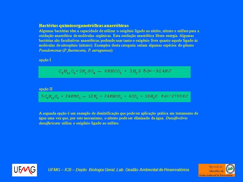 UFMG – ICB – Depto. Biologia Geral, Lab. Gestão Ambiental de Reservatórios Bactérias quimioorganotróficas anaeróbicas Algumas bactérias têm a capacida