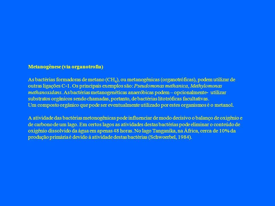 Metanogênese (via organotrofia) As bactérias formadoras de metano (CH 4 ), ou metanogênicas (organotróficas), podem utilizar de outras ligações C-1. O