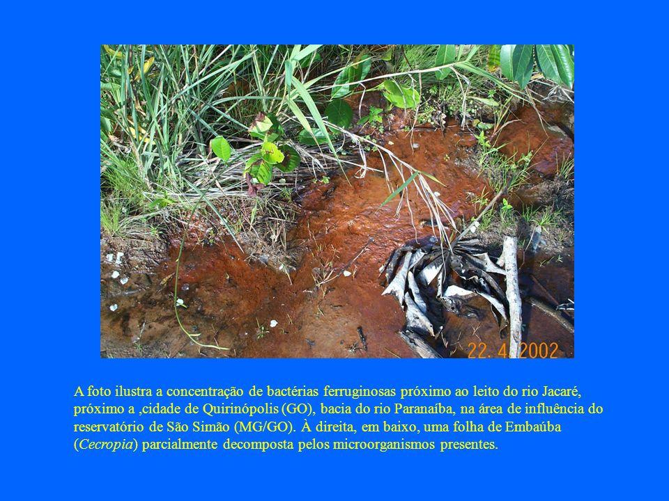 A foto ilustra a concentração de bactérias ferruginosas próximo ao leito do rio Jacaré, próximo a,cidade de Quirinópolis (GO), bacia do rio Paranaíba,