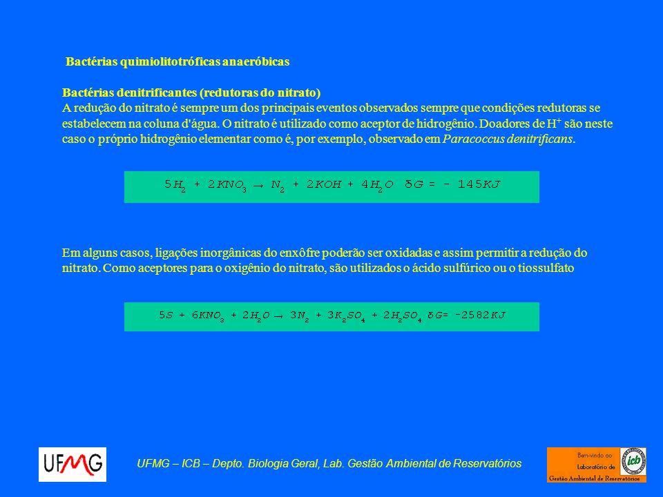 UFMG – ICB – Depto. Biologia Geral, Lab. Gestão Ambiental de Reservatórios Bactérias quimiolitotróficas anaeróbicas Bactérias denitrificantes (redutor