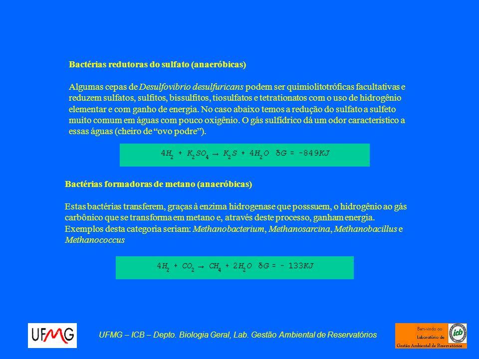 UFMG – ICB – Depto. Biologia Geral, Lab. Gestão Ambiental de Reservatórios Bactérias redutoras do sulfato (anaeróbicas) Algumas cepas de Desulfovibrio