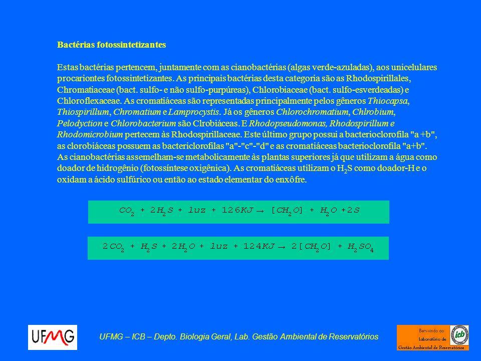 UFMG – ICB – Depto. Biologia Geral, Lab. Gestão Ambiental de Reservatórios Bactérias fotossintetizantes Estas bactérias pertencem, juntamente com as c