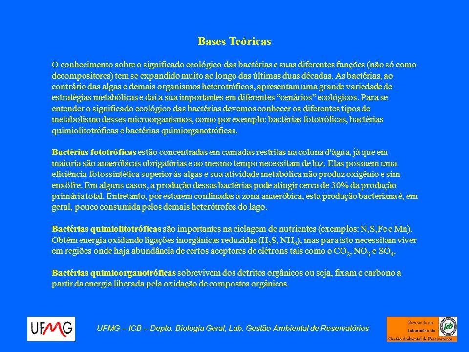 UFMG – ICB – Depto. Biologia Geral, Lab. Gestão Ambiental de Reservatórios Bases Teóricas O conhecimento sobre o significado ecológico das bactérias e