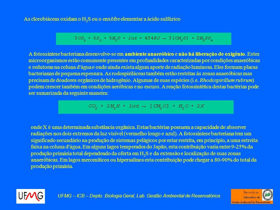 UFMG – ICB – Depto. Biologia Geral, Lab. Gestão Ambiental de Reservatórios As clorobiáceas oxidam o H 2 S ou o enxôfre elementar a ácido sulfúrico A f