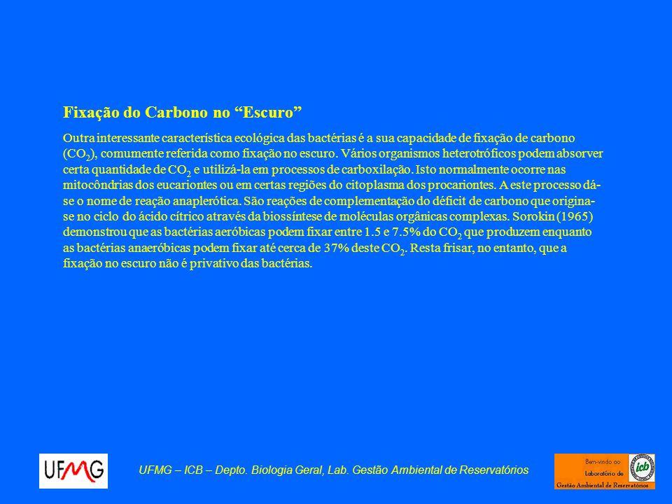 UFMG – ICB – Depto. Biologia Geral, Lab. Gestão Ambiental de Reservatórios Fixação do Carbono no Escuro Outra interessante característica ecológica da