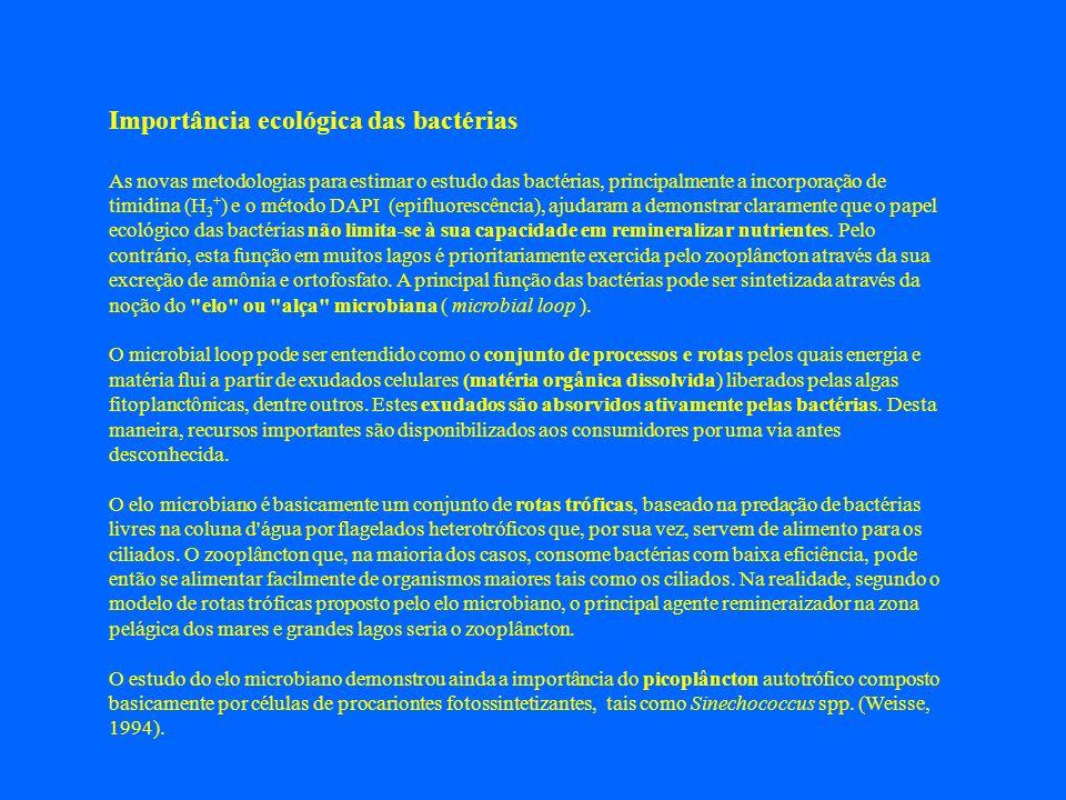 Importância ecológica das bactérias As novas metodologias para estimar o estudo das bactérias, principalmente a incorporação de timidina (H 3 + ) e o