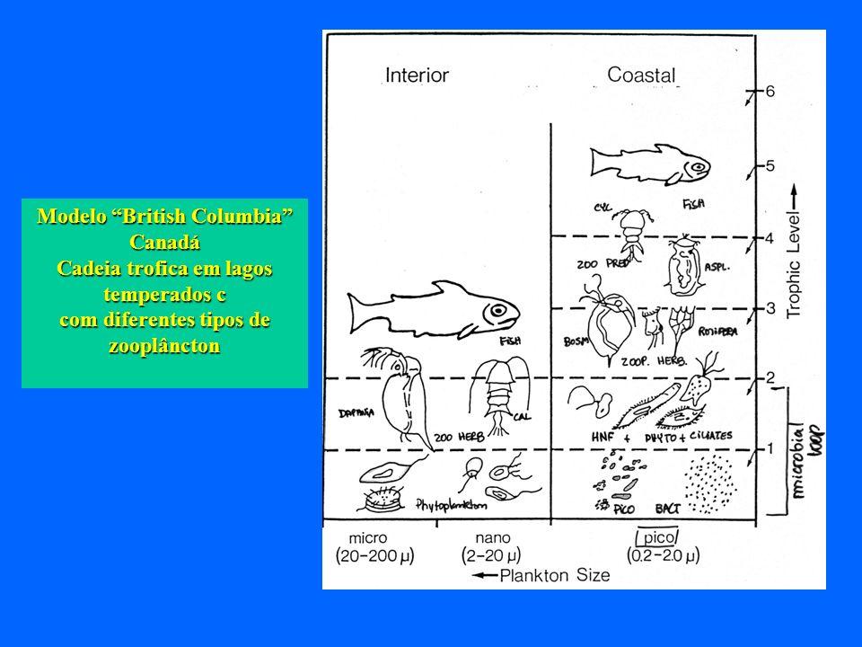 Modelo British Columbia Canadá Cadeia trofica em lagos temperados c com diferentes tipos de zooplâncton