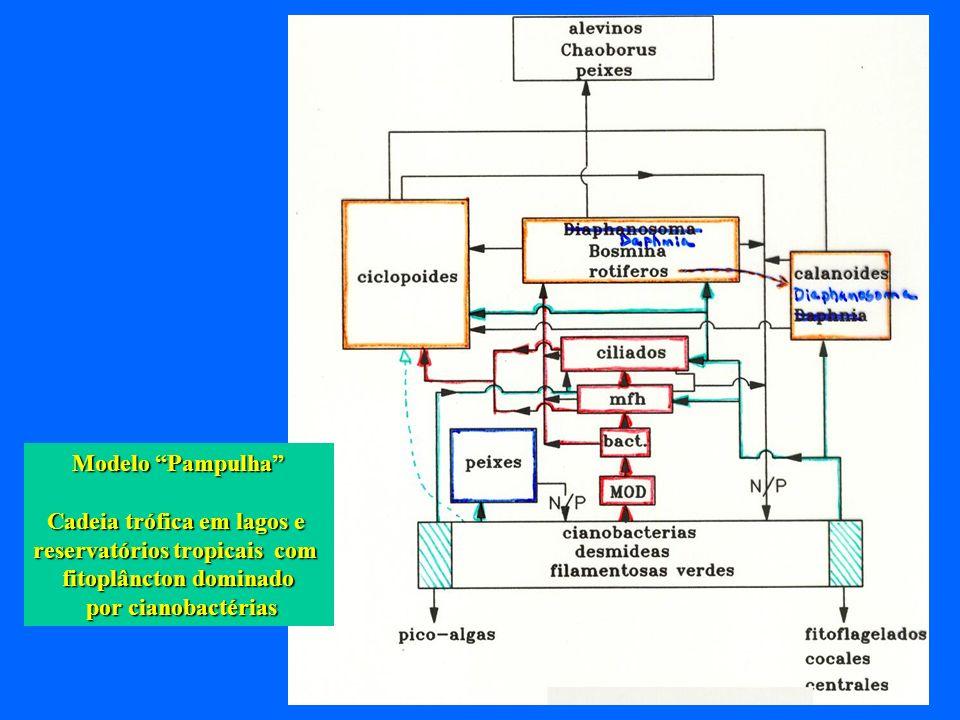 Modelo Pampulha Cadeia trófica em lagos e reservatórios tropicais com fitoplâncton dominado por cianobactérias por cianobactérias