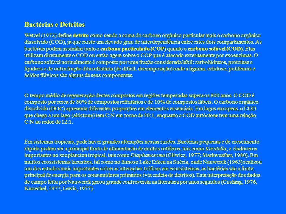 Bactérias e Detritos Wetzel (1972) define detrito como sendo a soma do carbono orgânico particular mais o carbono orgânico dissolvido (COD), já que ex