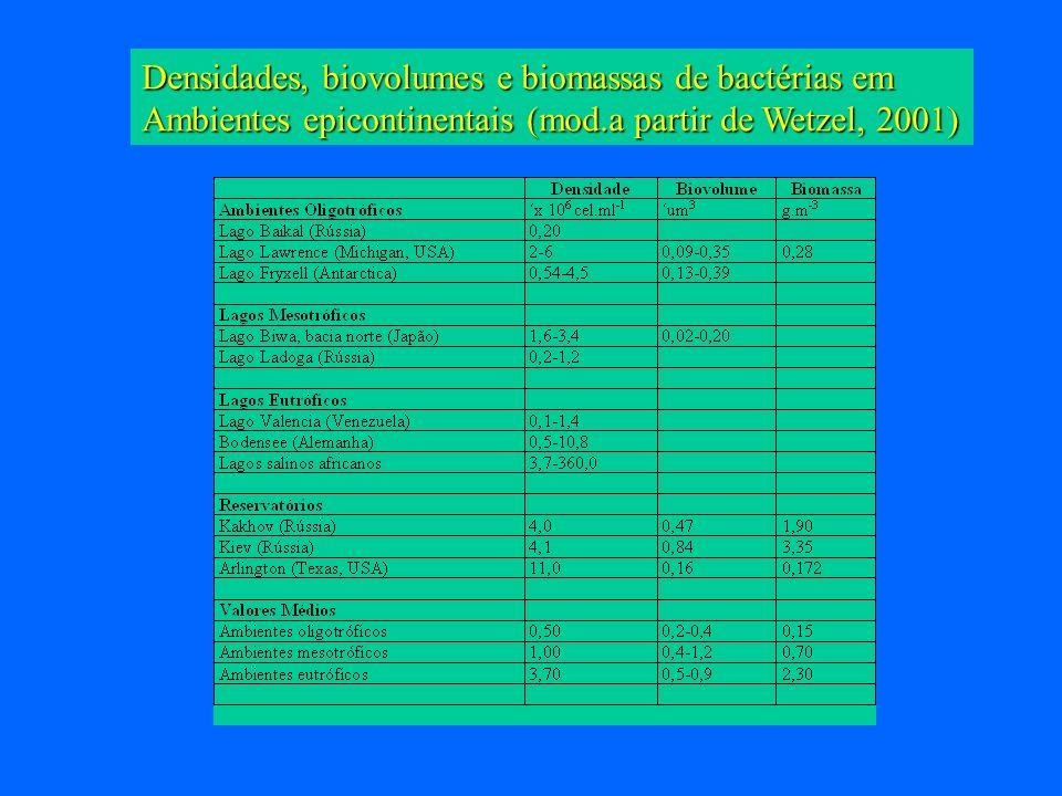 Densidades, biovolumes e biomassas de bactérias em Ambientes epicontinentais (mod.a partir de Wetzel, 2001)