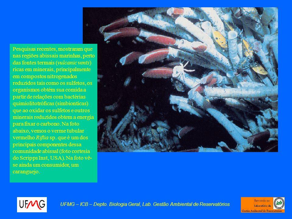 UFMG – ICB – Depto. Biologia Geral, Lab. Gestão Ambiental de Reservatórios Pesquisas recentes, mostraram que nas regiões abissais marinhas, perto das