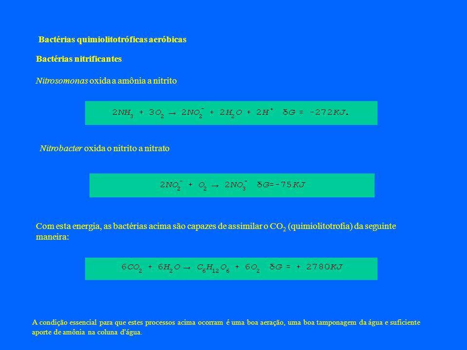 Bactérias nitrificantes Nitrosomonas oxida a amônia a nitrito Nitrobacter oxida o nitrito a nitrato Com esta energia, as bactérias acima são capazes d
