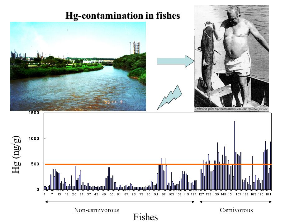 Fishes CarnivorousNon-carnivorous Hg (ng/g) Hg-contamination in fishes