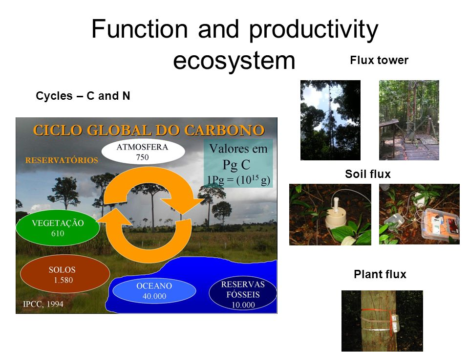 Function and productivity ecosystem Cycles – C and N Flux tower Soil flux Plant flux