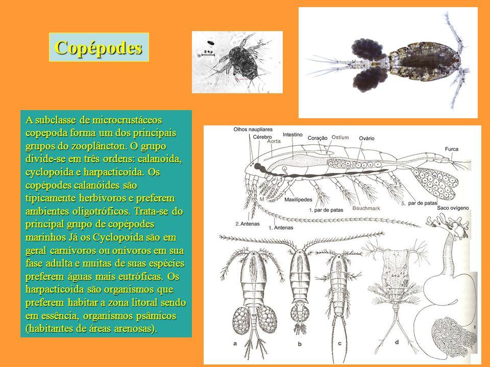 A subclasse de microcrustáceos copepoda forma um dos principais grupos do zooplâncton.