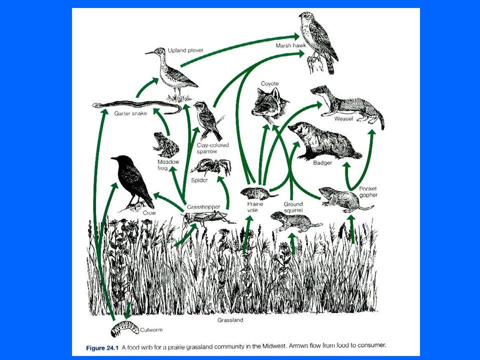 7) Pirâmides ecológicas Mesmo as representações mais simplificadas de uma rede ou teia alimentar podem tornar muito complexas.