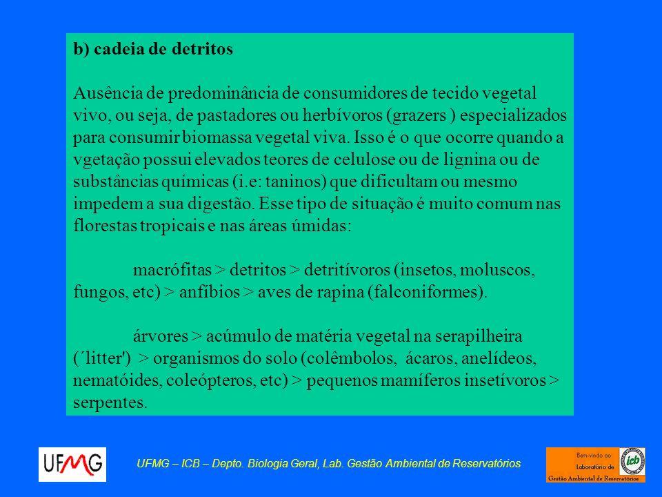 b) cadeia de detritos Ausência de predominância de consumidores de tecido vegetal vivo, ou seja, de pastadores ou herbívoros (grazers ) especializados