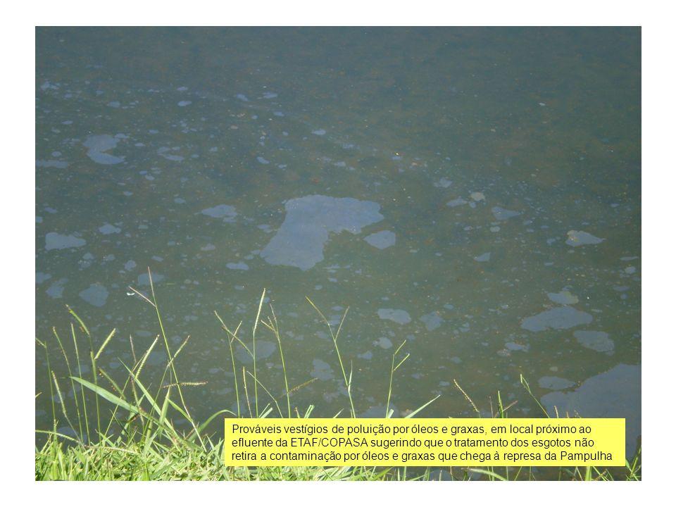 Prováveis vestígios de poluição por óleos e graxas, em local próximo ao efluente da ETAF/COPASA sugerindo que o tratamento dos esgotos não retira a contaminação por óleos e graxas que chega à represa da Pampulha.
