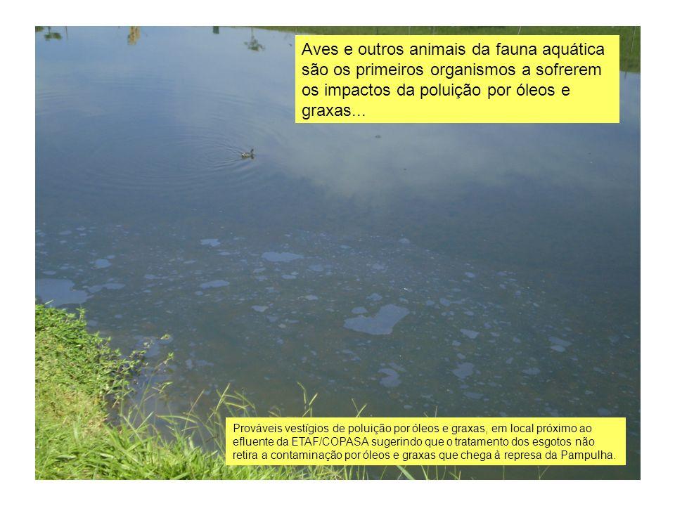 Prováveis vestígios de poluição por óleos e graxas, em local próximo ao efluente da ETAF/COPASA sugerindo que o tratamento dos esgotos não retira a co