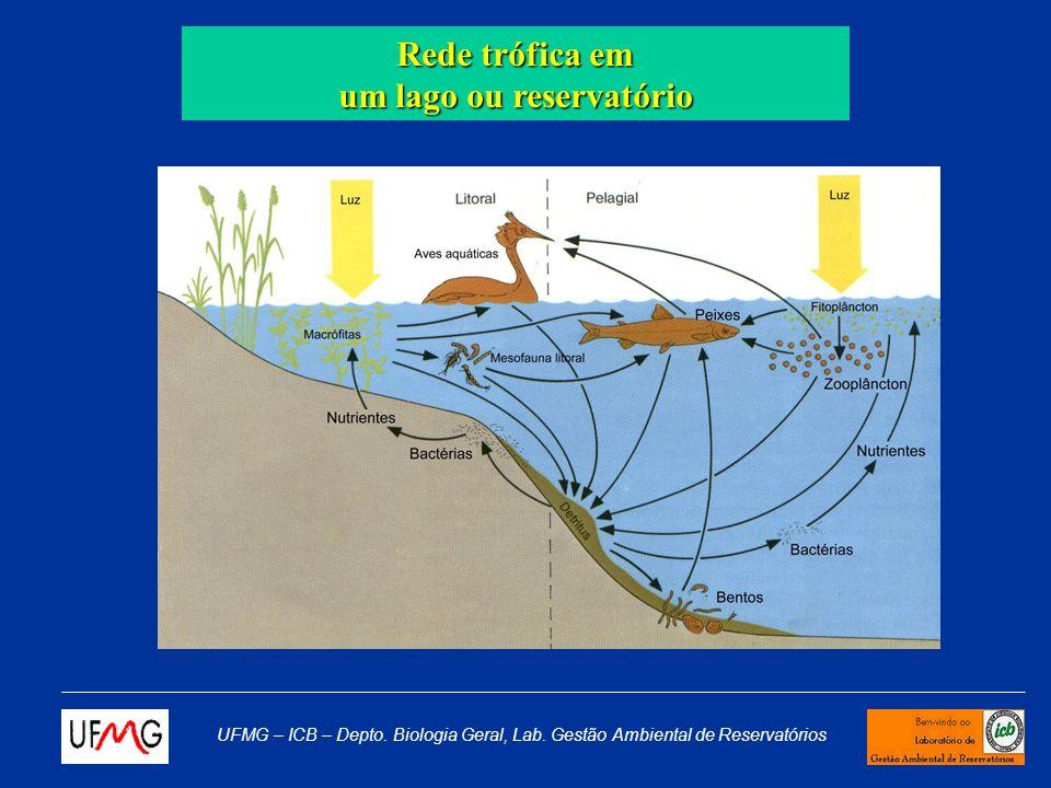 UFMG – ICB – Depto. Biologia Geral, Lab. Gestão Ambiental de Reservatórios Coleta Redes