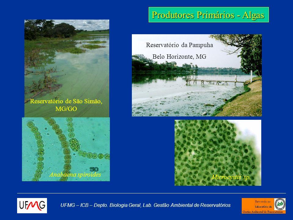 UFMG – ICB – Depto. Biologia Geral, Lab. Gestão Ambiental de Reservatórios Armadilhas Coleta