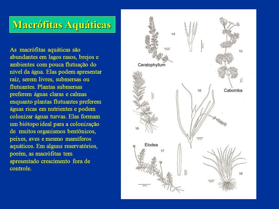 Macrófitas Aquáticas Plantas emergentes c/ raiz Plantas flutuantes UFMG – ICB – Depto.