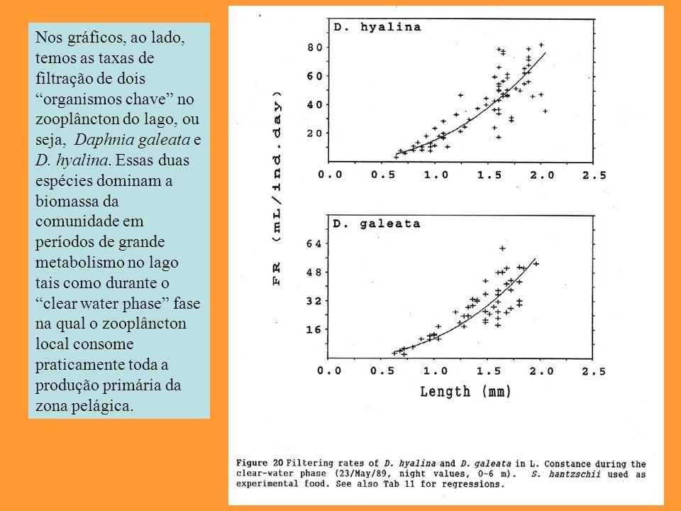 Nos gráficos, ao lado, temos as taxas de filtração de dois organismos chave no zooplâncton do lago, ou seja, Daphnia galeata e D. hyalina. Essas duas