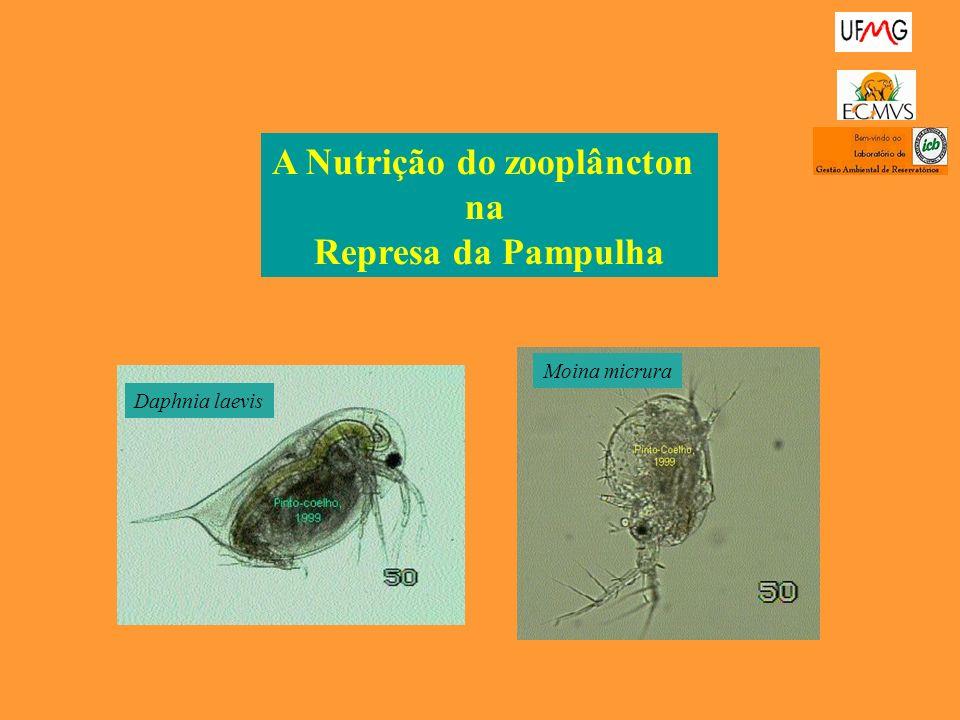 A Nutrição do zooplâncton na Represa da Pampulha Daphnia laevis Moina micrura