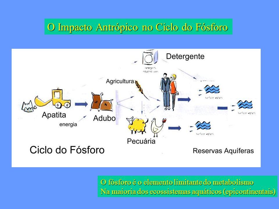 O fósforo é o elemento limitante do metabolismo Na maioria dos ecossistemas aquáticos (epicontinentais) O Impacto Antrópico no Ciclo do Fósforo