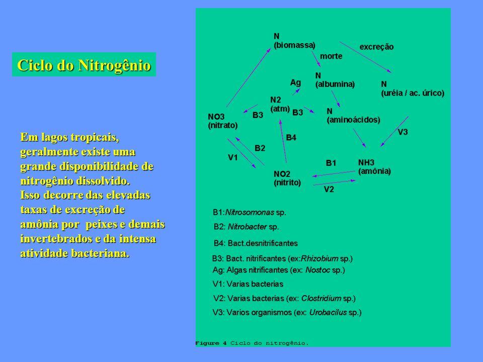 Ciclo do Nitrogênio Em lagos tropicais, geralmente existe uma grande disponibilidade de nitrogênio dissolvido. Isso decorre das elevadas taxas de excr
