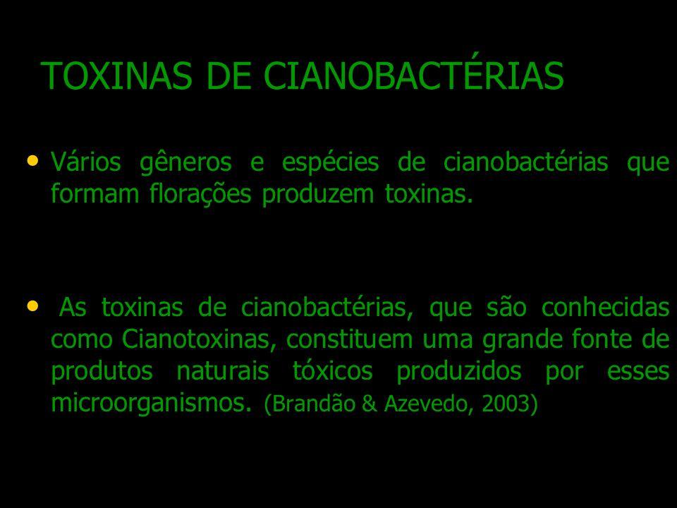 TOXINAS DE CIANOBACTÉRIAS Vários gêneros e espécies de cianobactérias que formam florações produzem toxinas. As toxinas de cianobactérias, que são con