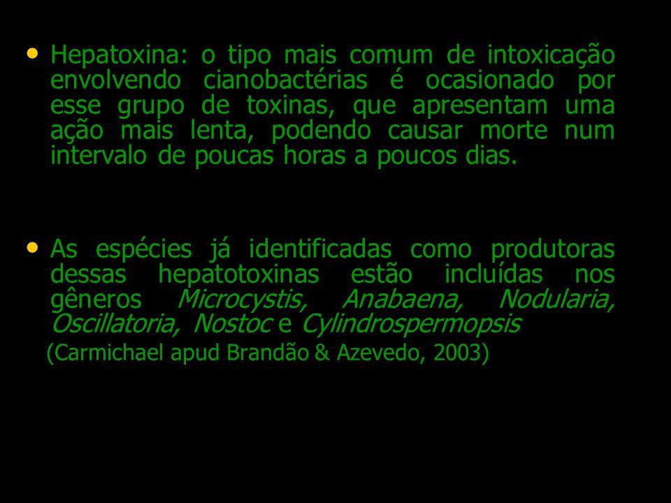 Hepatoxina: o tipo mais comum de intoxicação envolvendo cianobactérias é ocasionado por esse grupo de toxinas, que apresentam uma ação mais lenta, pod