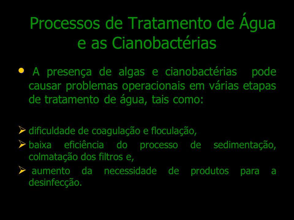 Processos de Tratamento de Água e as Cianobactérias A presença de algas e cianobactérias pode causar problemas operacionais em várias etapas de tratam