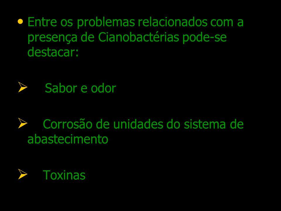 Entre os problemas relacionados com a presença de Cianobactérias pode-se destacar: Sabor e odor Corrosão de unidades do sistema de abastecimento Toxin