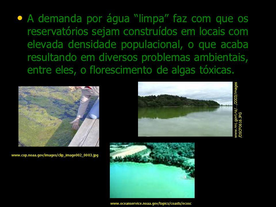 Fitoplâncton Em água interiores é possível encontrar representante de praticamente todos os grupos de algas.