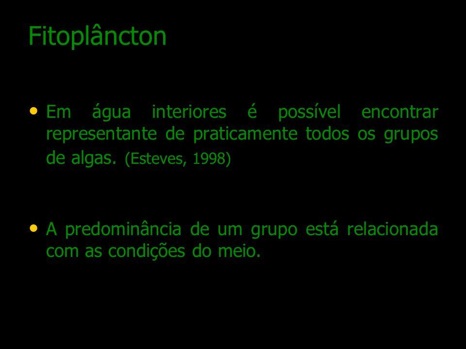 Fitoplâncton Em água interiores é possível encontrar representante de praticamente todos os grupos de algas. (Esteves, 1998) A predominância de um gru