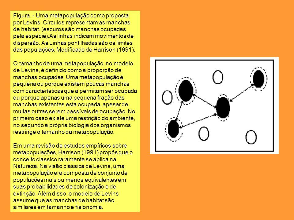 Figura - Uma metapopulação como proposta por Levins. Círculos representam as manchas de habitat. (escuros são manchas ocupadas pela espécie).As linhas