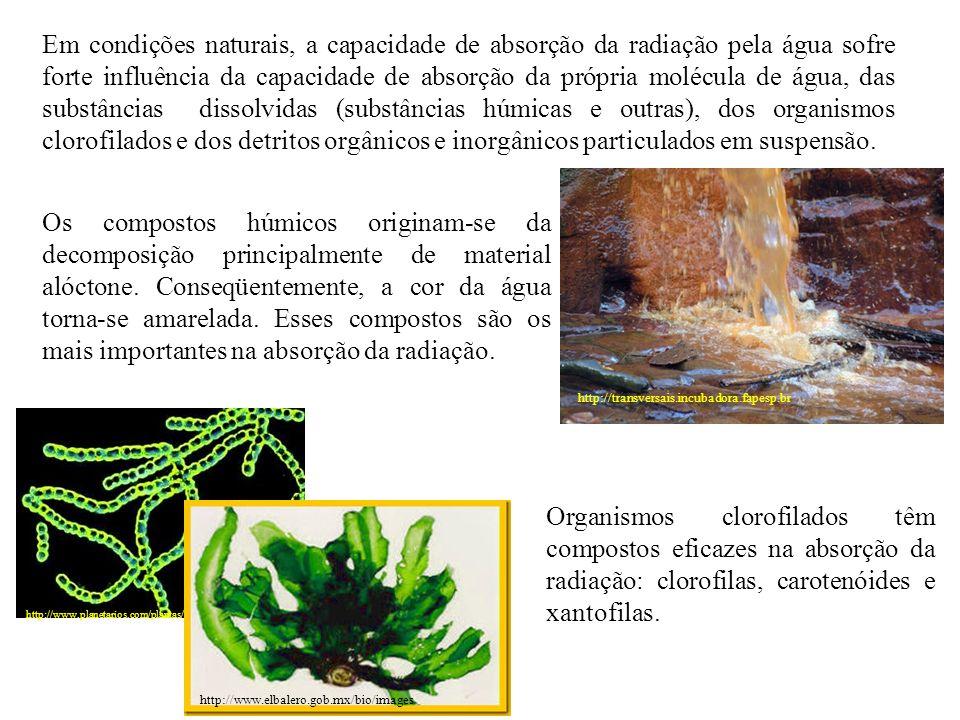 Outra parte da radiação sofre dispersão, desvio da trajetória original que ocorre pelo choque da radiação com partículas dissolvidas ou em suspensão na água.