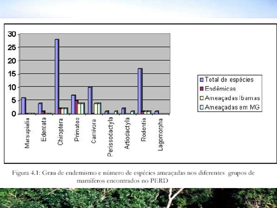 Mastofauna Fonseca (2001) Espécies vulneráveis e de interesse – 77 espécies de mamíferos – 9 ordens – 33% de todas as espécies descritas na Mata Atlântica ( 260 espécies ) 16% das espécies são endêmicas – 12 espécies figuram na lista do IBAMA de ameaçadas e 14 na lista do COPAM Ordem dos primatas – 7 das 17 espécies descritas na Mata Atlântica, sendo 4 ameaçadas Ordem dos felídeos – 5 espécies, sendo que 4 estão ameaçadas Anta e porco-do-mato também ameaçados de extinção